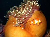 Coron-dive-site-9-Wreck-dive-East-Tangat-July-2005-28